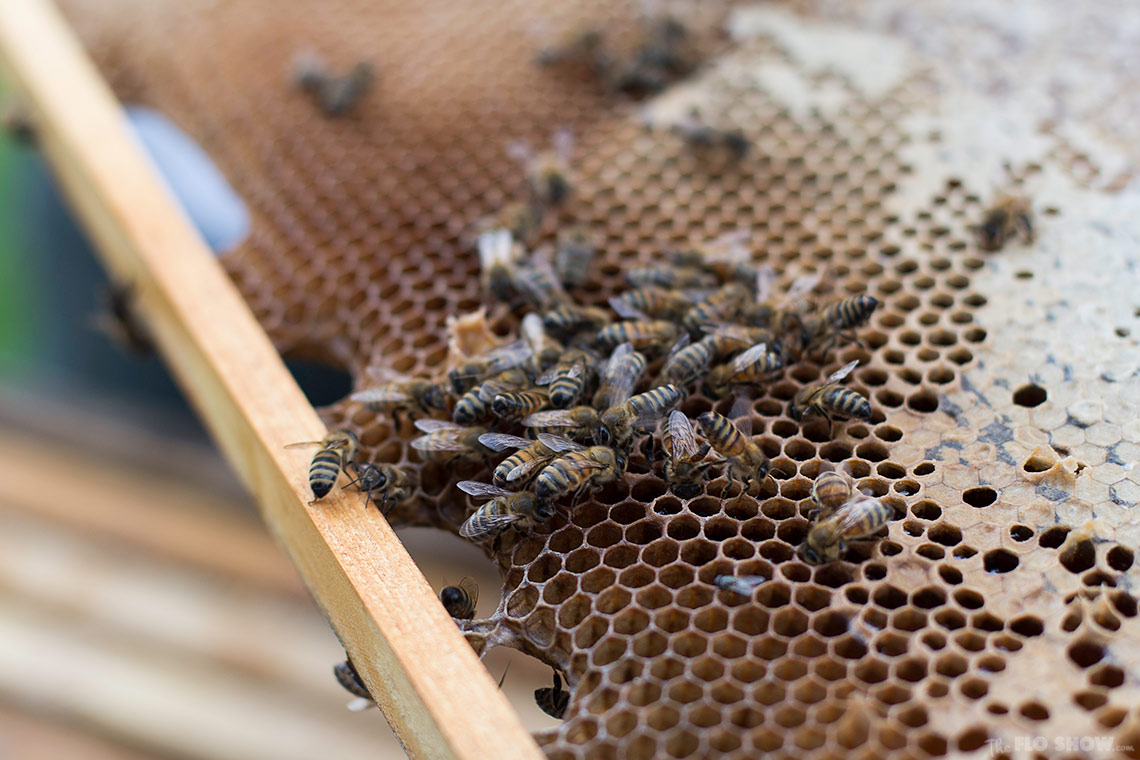Bee course with the Illawarra Beekeepers Association - Bees are so beautiful and actually cute - on www.TheFloShow.com