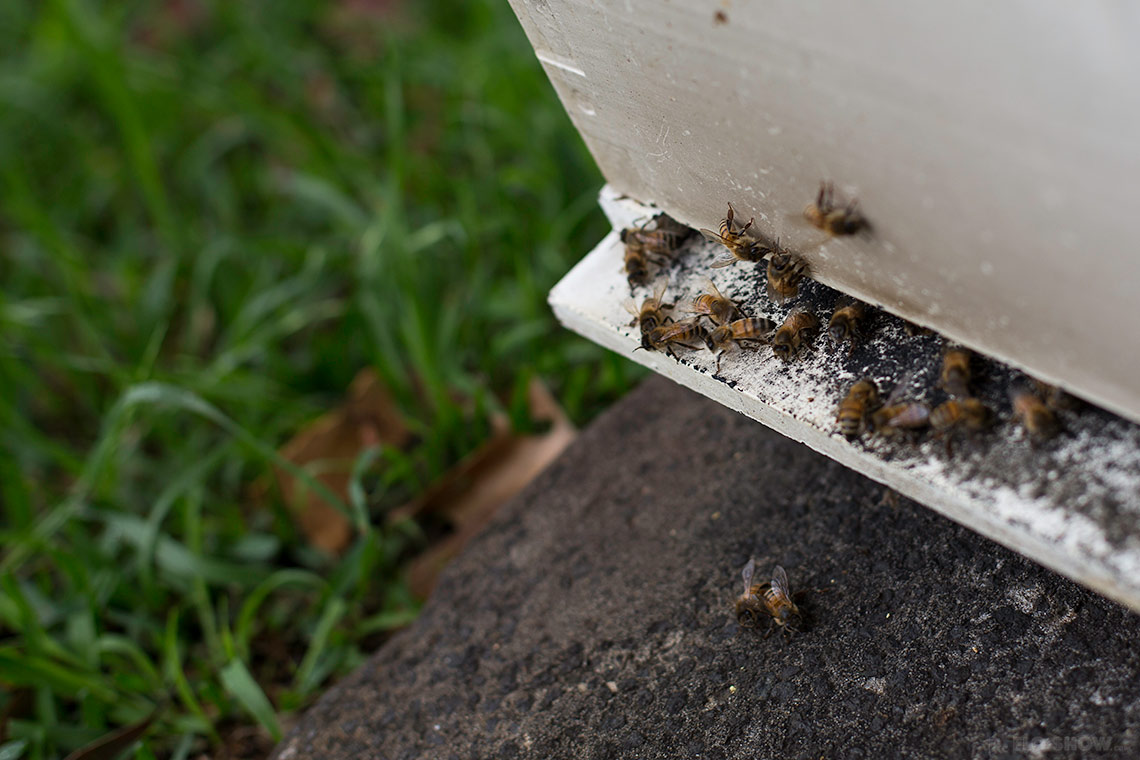 Bee course with the Illawarra Beekeepers Association - Prepare yourself for beekeeping - on www.TheFloShow.com