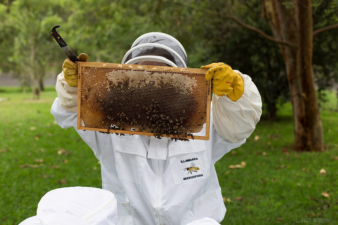 Bee course with the Illawarra Beekeepers Association - See the frames - on www.TheFloShow.com