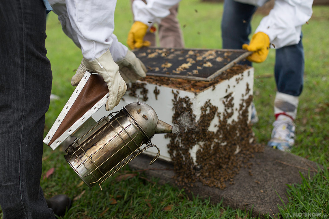 Bee course with the Illawarra Beekeepers Association - The best class in Sydney on www.TheFloShow.com