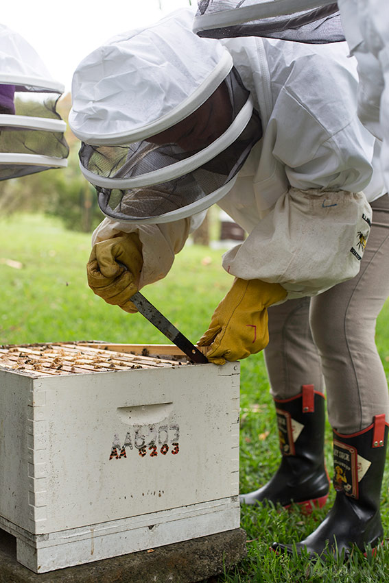 Bee course with the Illawarra Beekeepers Association - What you need to know - on www.TheFloShow.com