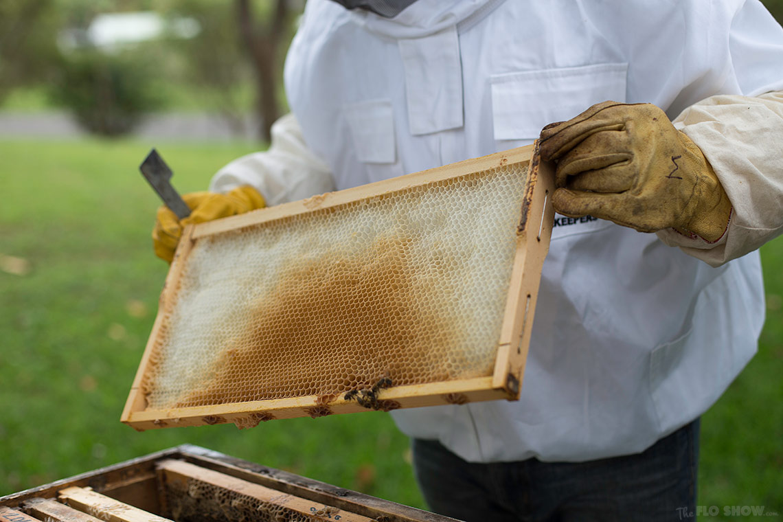 Bee course with the Illawarra Beekeepers Association - knowing the combs - on www.TheFloShow.com