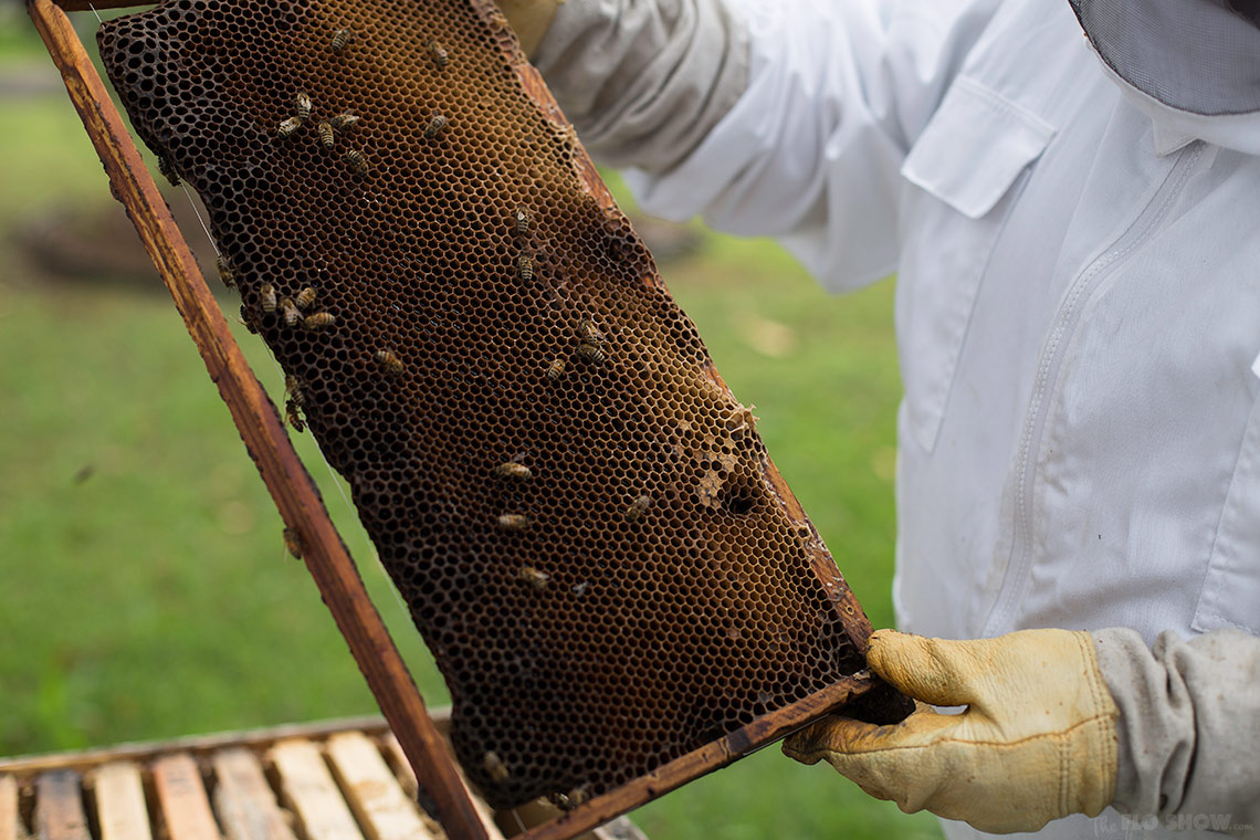 Bee course with the Illawarra Beekeepers Association - learning bekeeping - on www.TheFloShow.com
