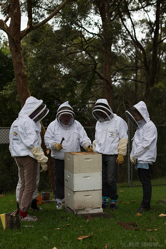 Bee course with the Illawarra Beekeepers Association - small goups of people to learn better - on www.TheFloShow.com