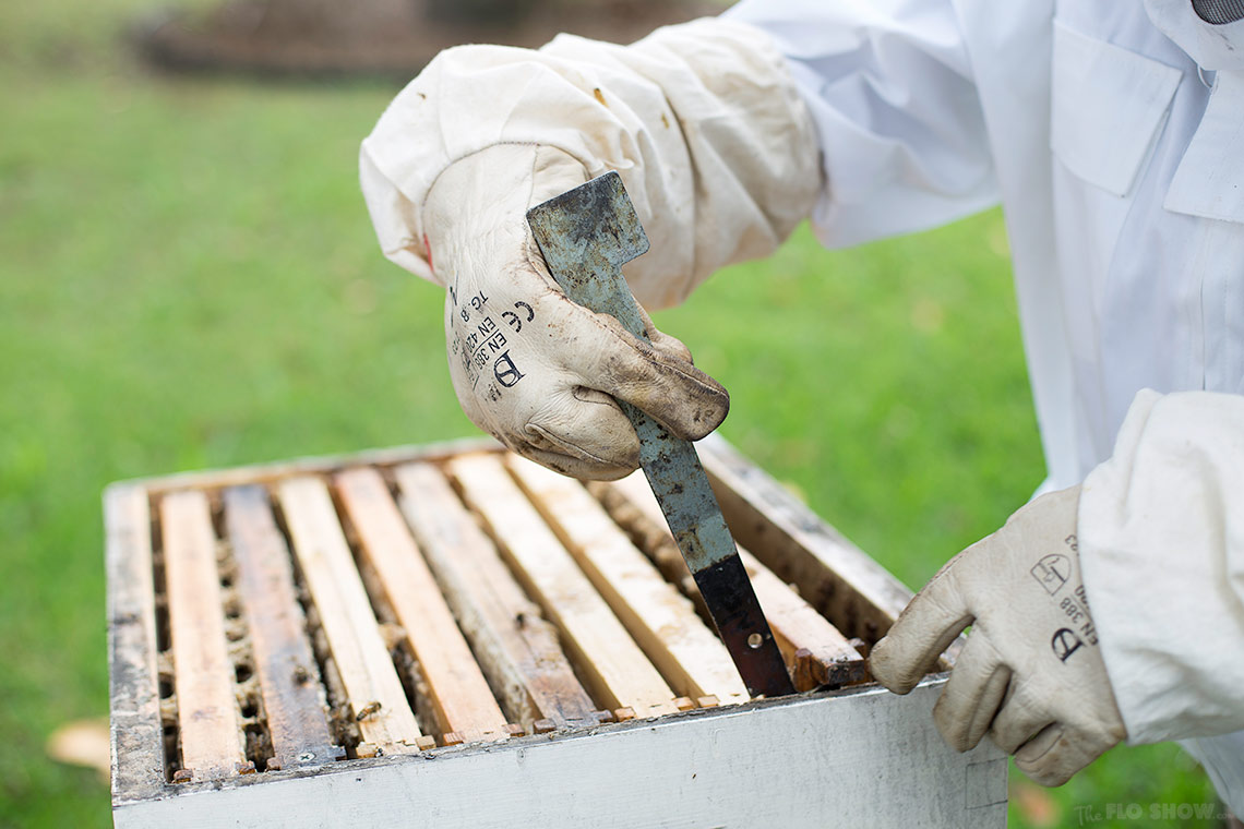Bee course with the Illawarra Beekeepers Association - using the tools - on www.TheFloShow.com