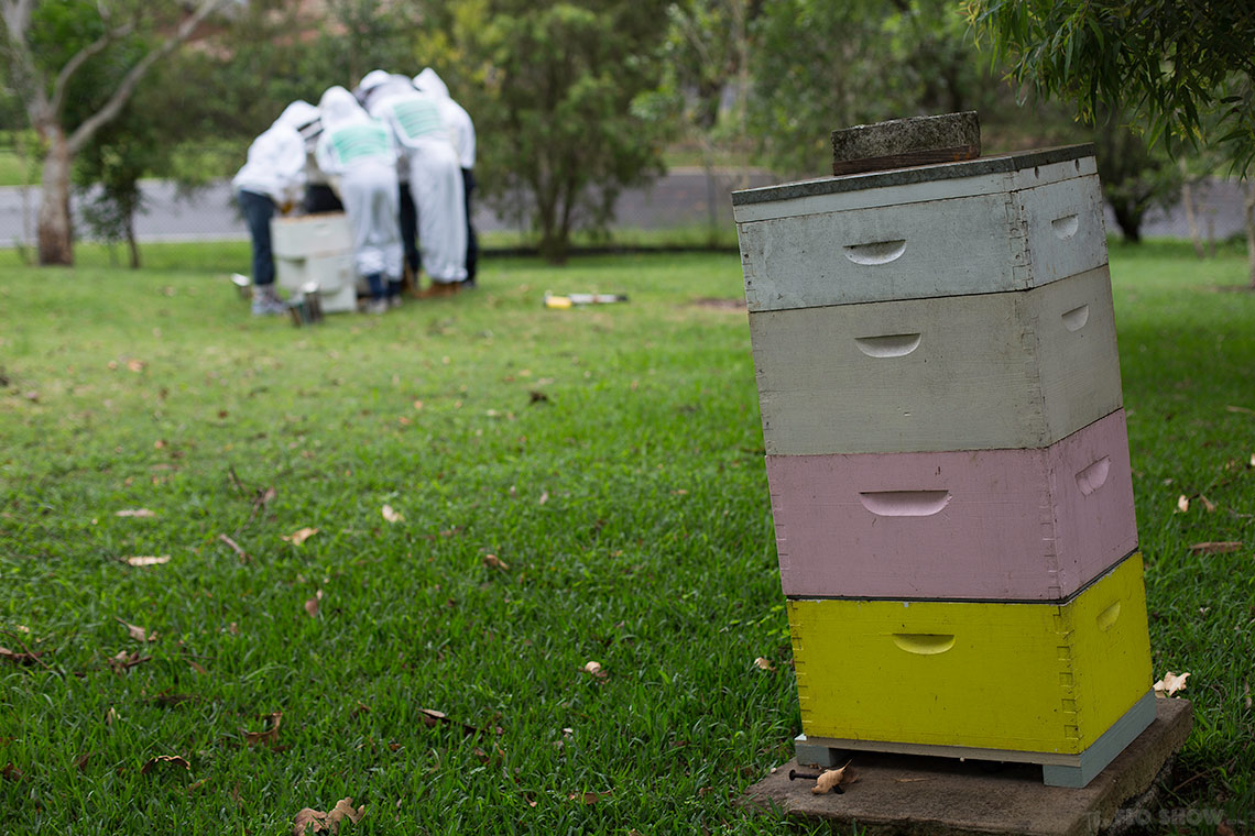 Bee course with the Illawarra Beekeepers Association - why do you need to lean your beehives  - on www.TheFloShow.com