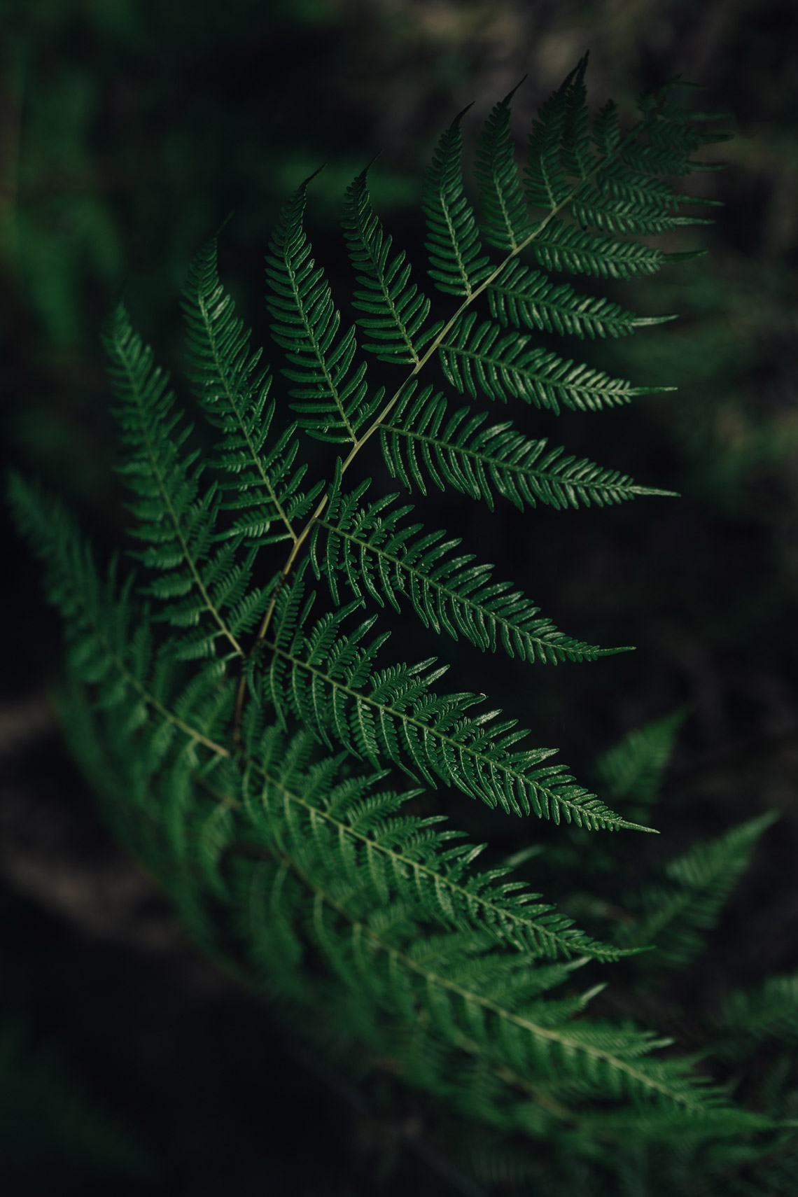 A passion for ferns in Australia - on www.TheFloShow.com