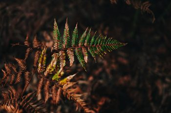 A passion for ferns - in the Royal National Park - on www.TheFloShow.com
