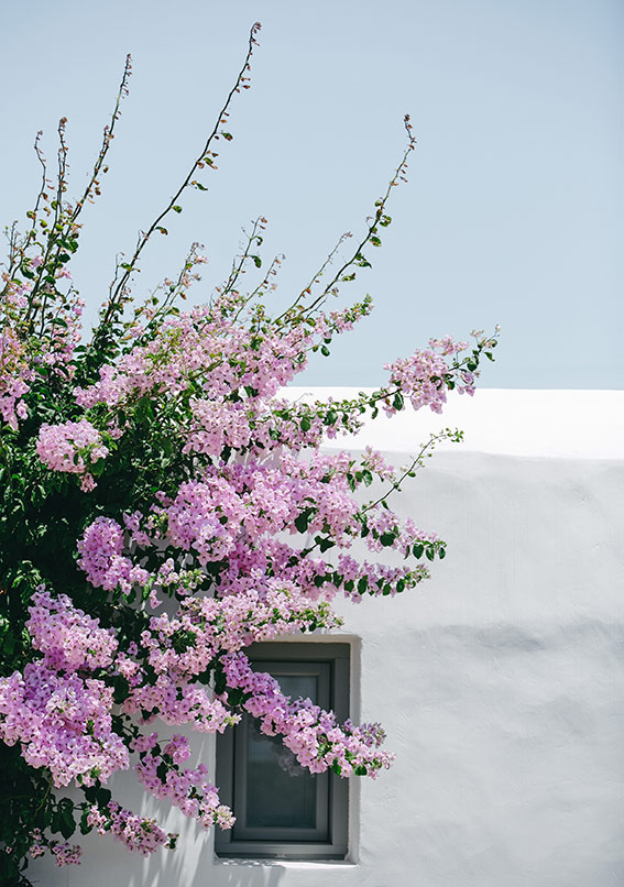 France with the Flo Show - Paros workshop - Bougainvillee