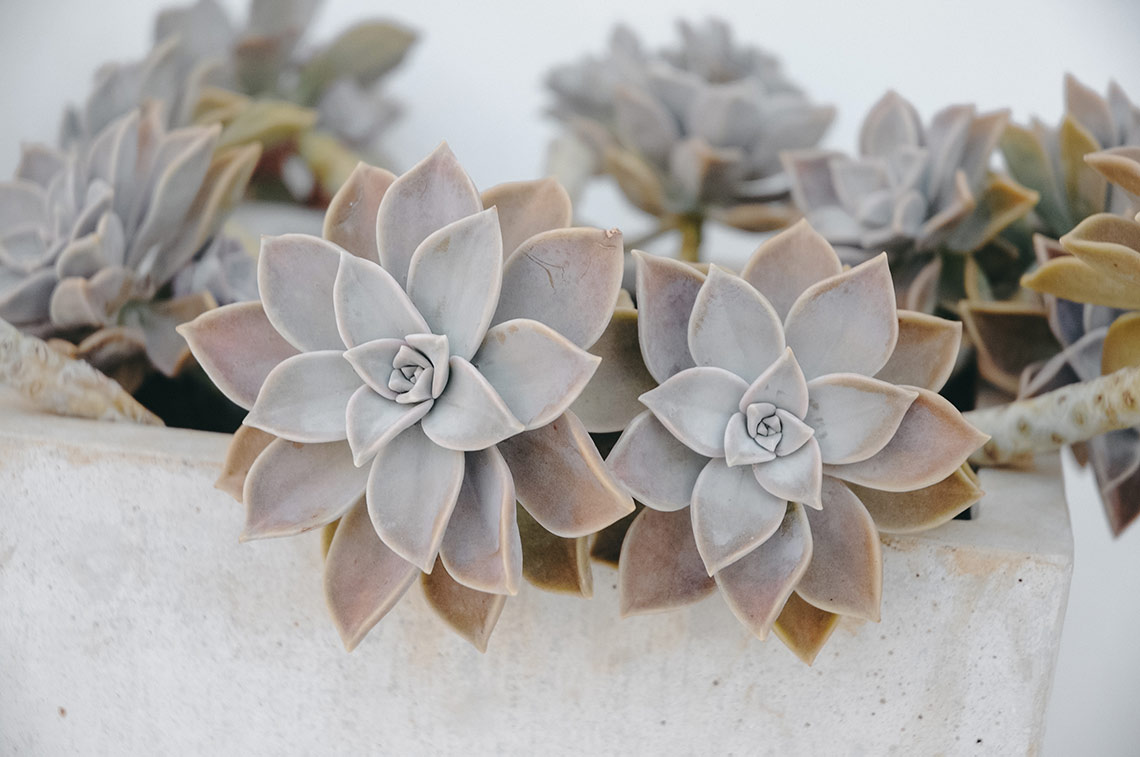 France with the Flo Show - Paros workshop - succulantes